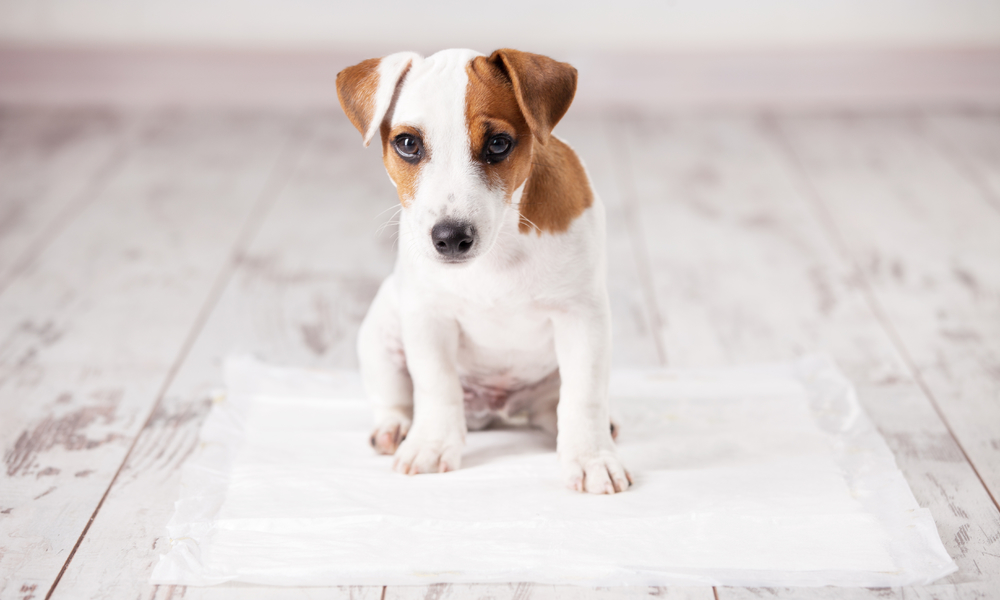 cut puppy sitting on an absorbent cloth for house training
